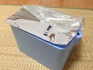 挿し芽BOX!!