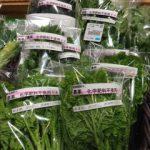 冬作野菜、ささやかに販売開始!