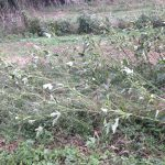 支柱の倒壊と塩害~台風後の畑~